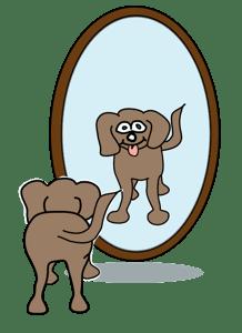 hund spiegel