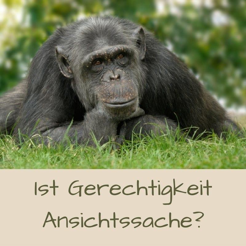 Geschichte: Affe als Schiedsrichter