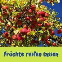 Früchte reifen lassen