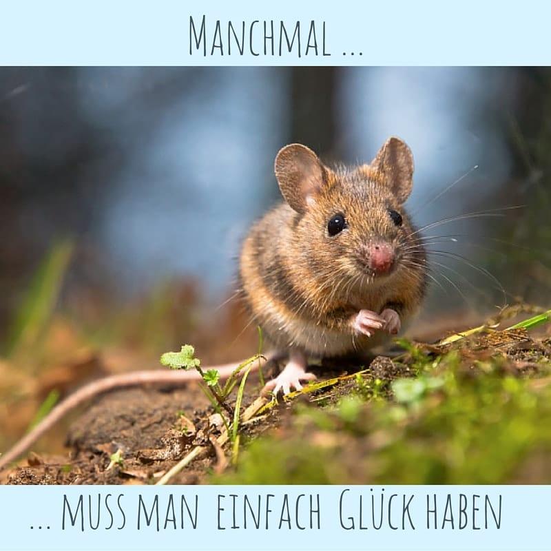 Maeuschen