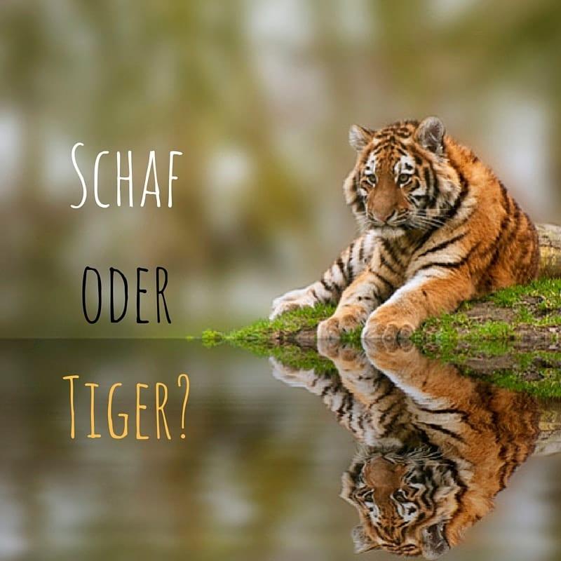 Schaf oder Tiger_